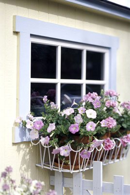 Flower pots hanging below a window